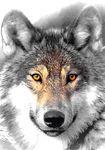 hugo-wolff